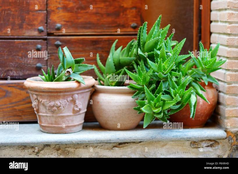 Variuos plants and flowers in colorful pots by a doorstep in typical     Variuos plants and flowers in colorful pots by a doorstep in typical  italian town