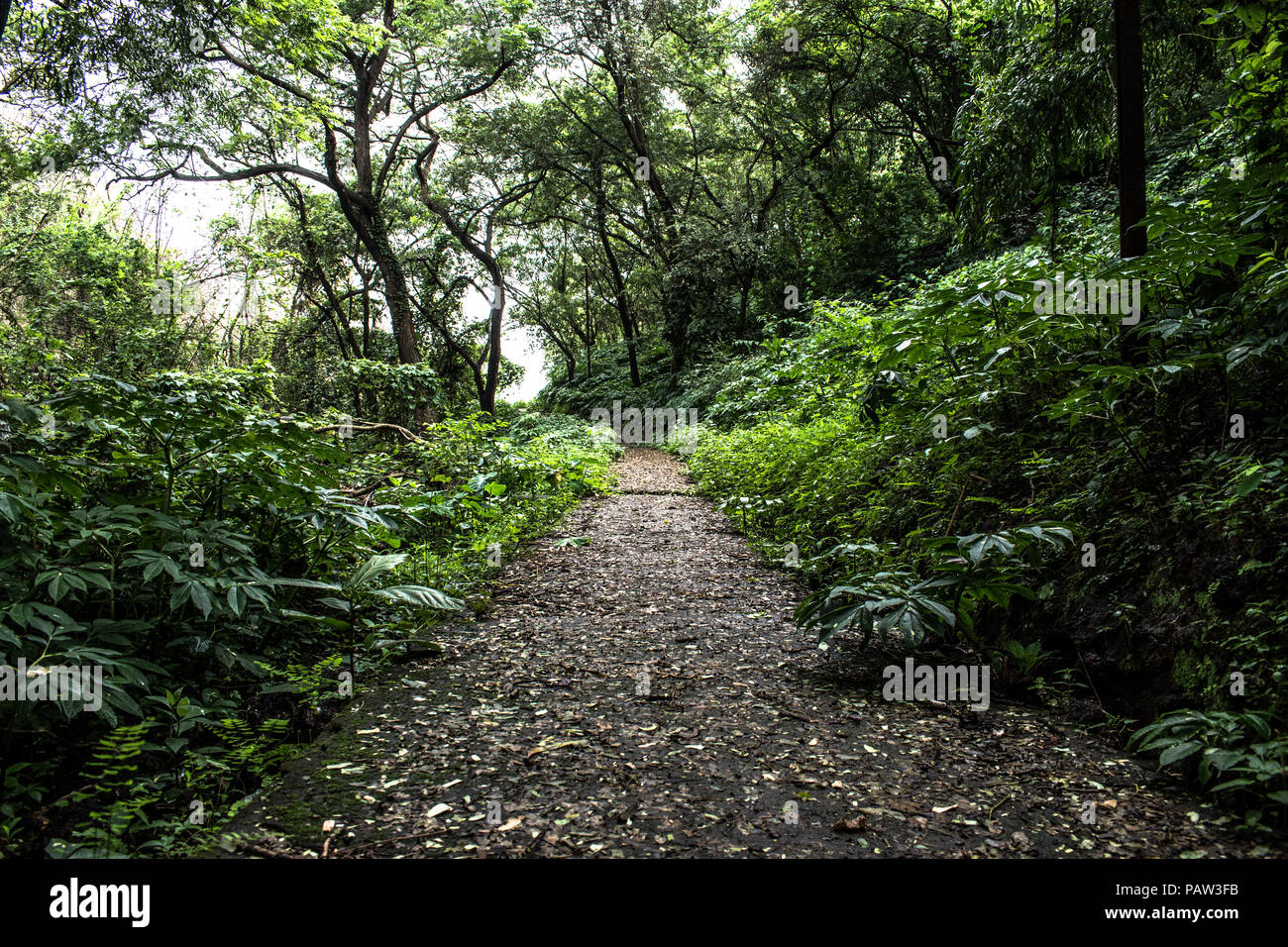 Tropical dry forest 69 annual rainfall and the seasonality of rainfall distribution [cf the findings o. Tropical Dry Forest India High Resolution Stock Photography And Images Alamy