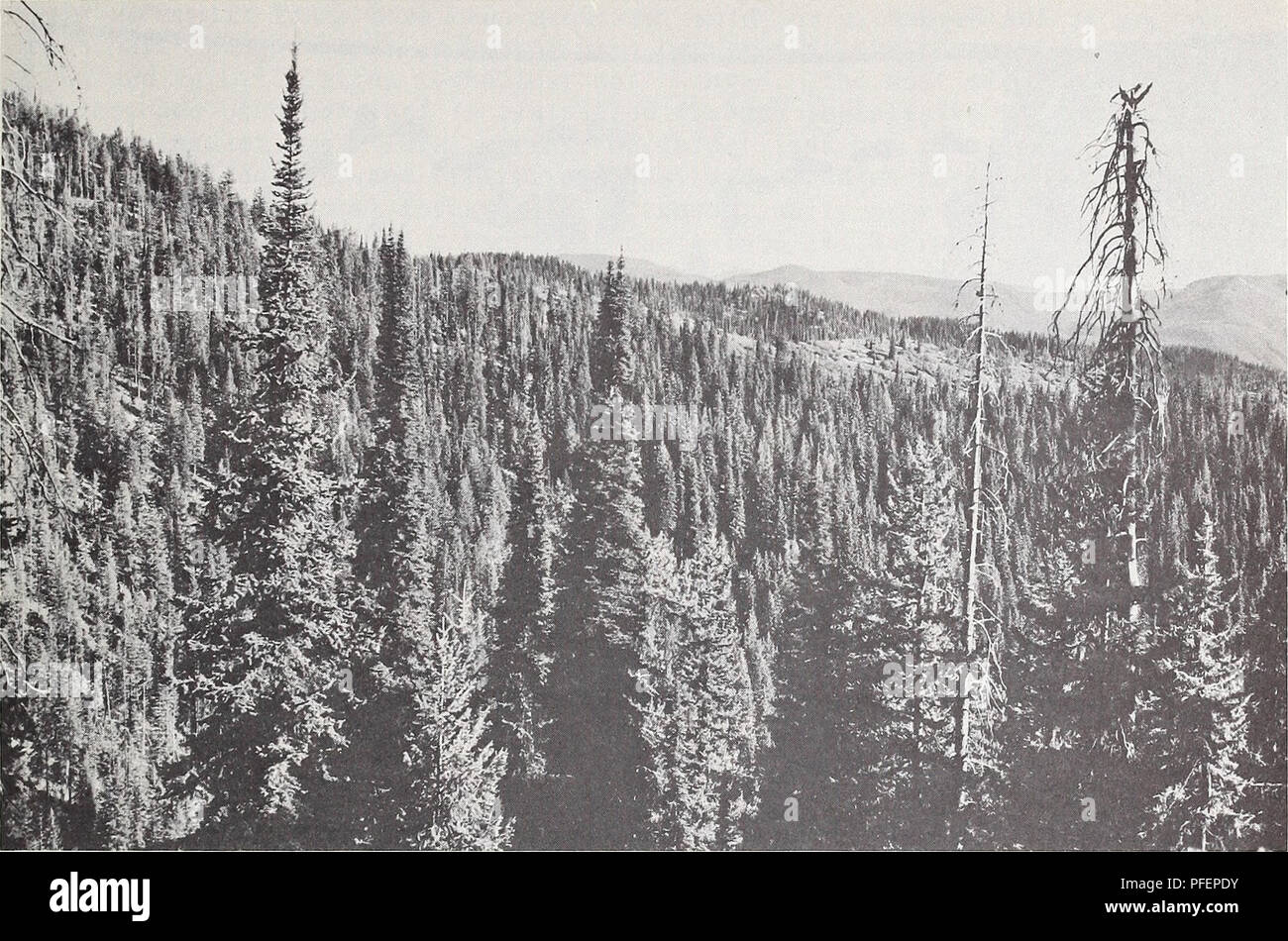 Some of florida's most important natural resources are its coastlines, seafood, minerals, citrus fruit, sugarcane, saw palmetto berries and forests. A Descriptive Analysis Of Montana S Forest Resources Forests And Forestry Montana Statistics Timber Montana Statistics Figure 6 Spruce Fir Forest On The Montana Idaho Border The Subalpine Zone Is The Highest And Forms The