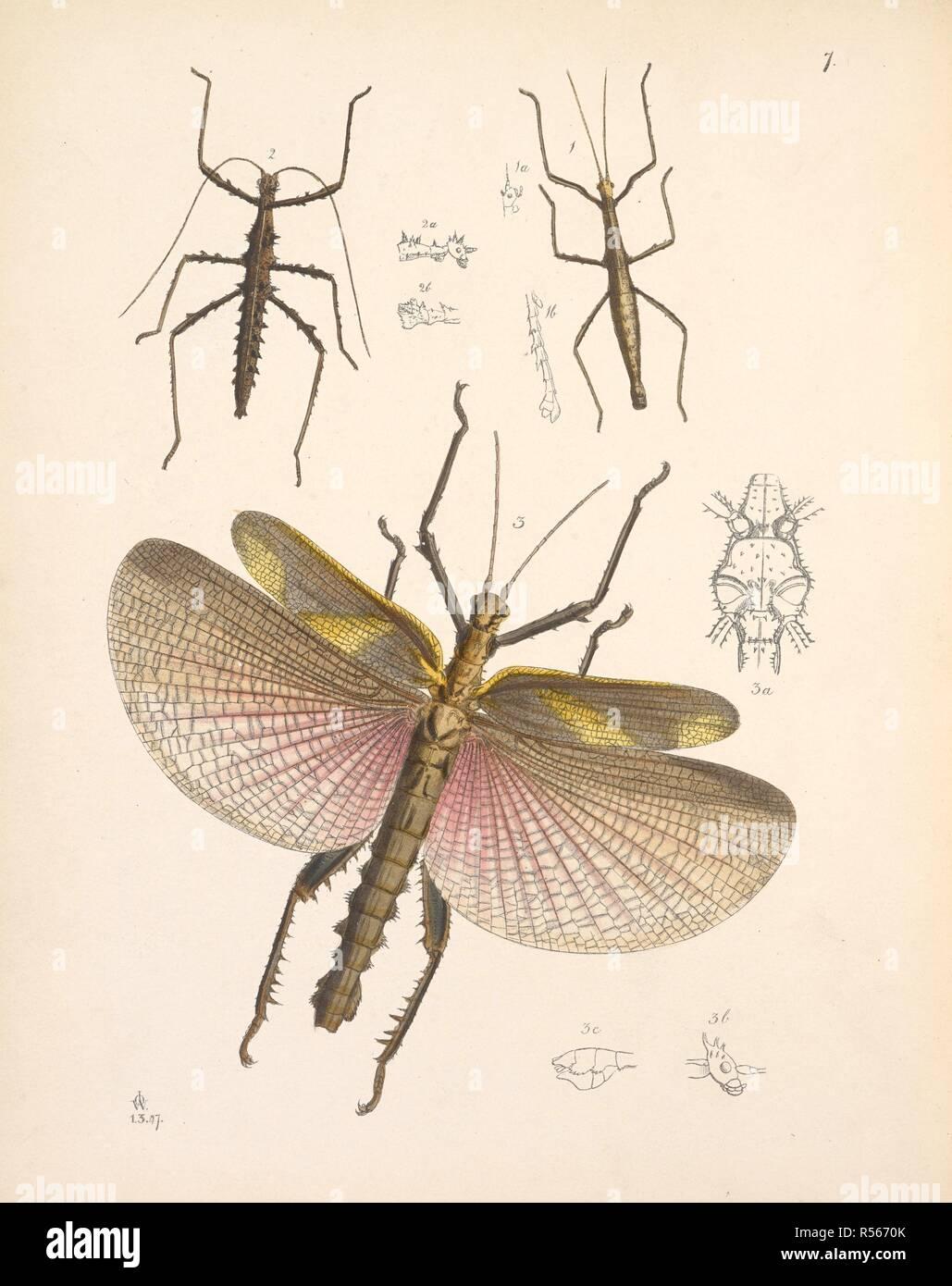 15 Best New Dragonfly Life Cycle Incomplete Metamorphosis