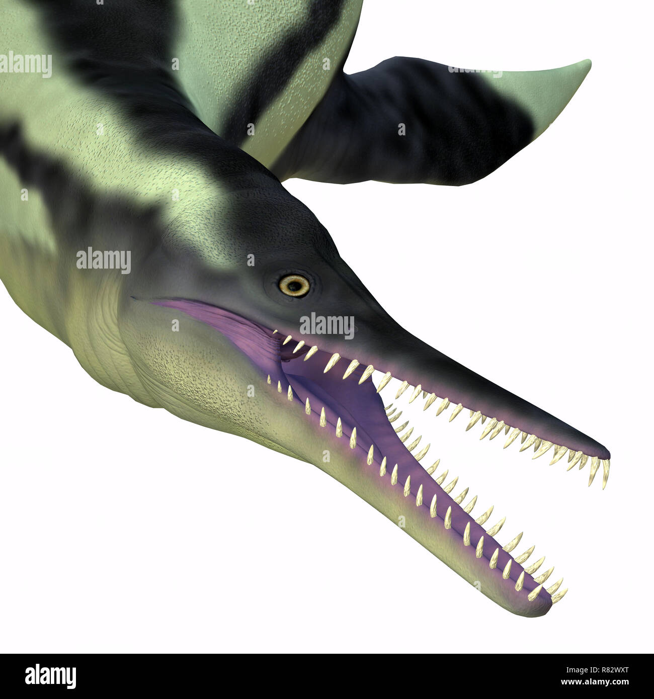 Prehistoric Sea Creature Stock Photos Amp Prehistoric Sea