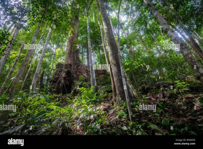 Rainforest In The Jungle Of Bukit Lawang North Sumatra Indonesia Stock Photo Alamy