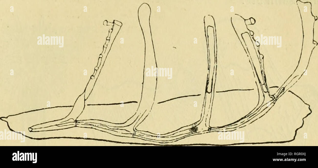 bulletin de la soci zoologique de france zoology monographie des bryozoaires d