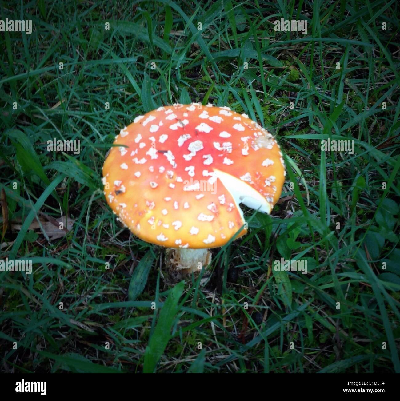Mushroom After Rain Stock Photos Amp Mushroom After Rain