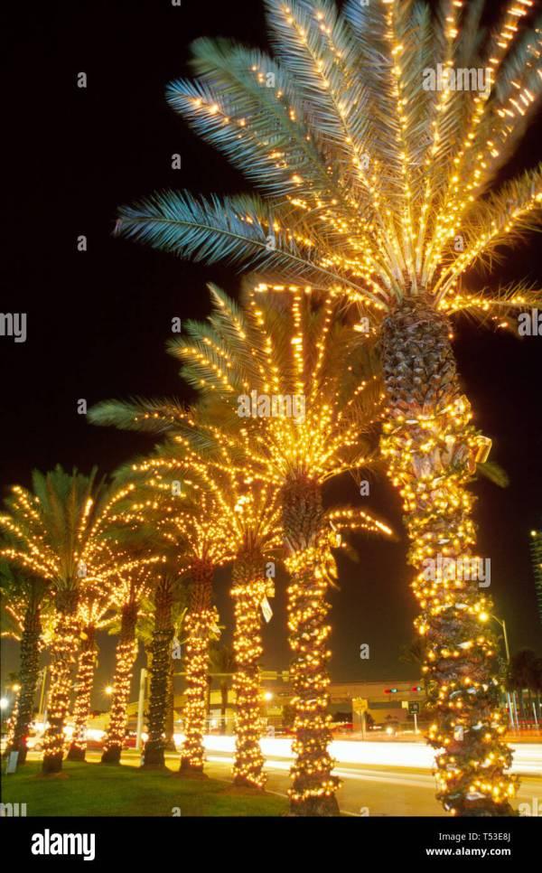christmas lights miami # 10