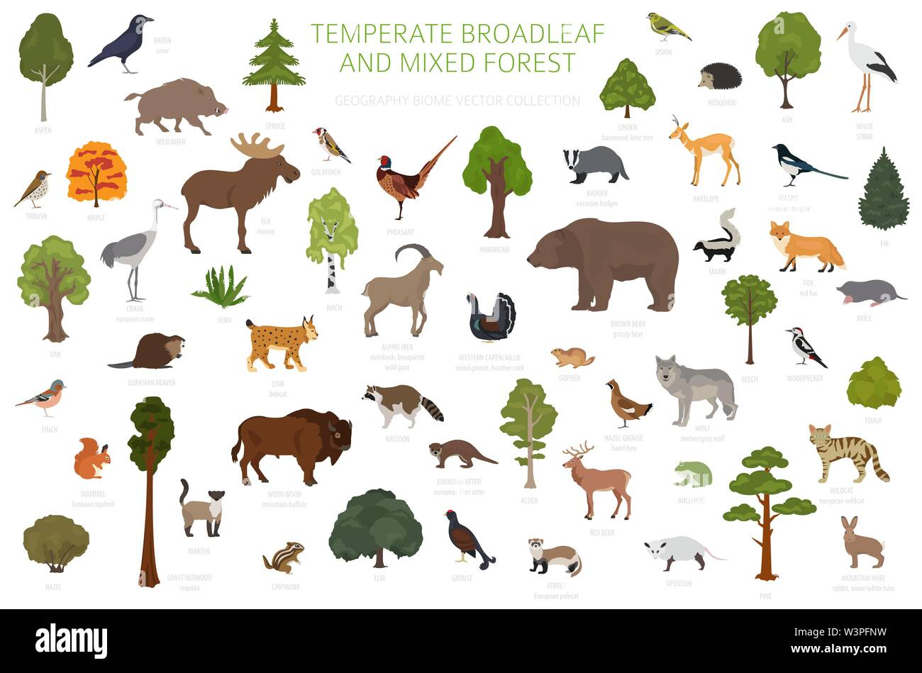 The northern forest as some species are no longer able to survive in the new climatic. Temperate Broadleaf Forest And Mixed Forest Biome Terrestrial Ecosystem World Map Animals Birds And Plants Graphic Design Vector Illustration Stock Vector Image Art Alamy