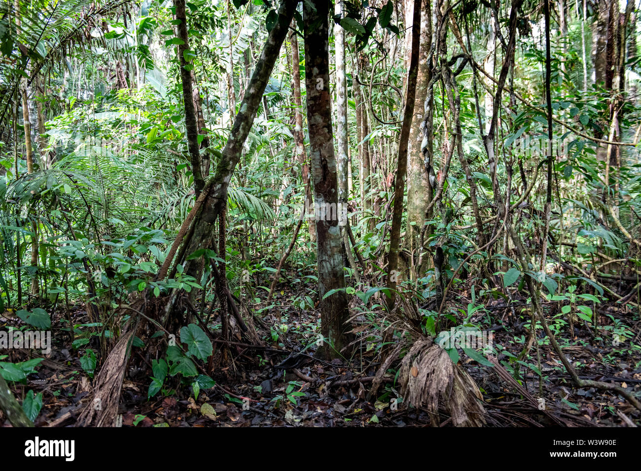 150 free images of amazon forest. Equatorial Forest High Resolution Stock Photography And Images Alamy