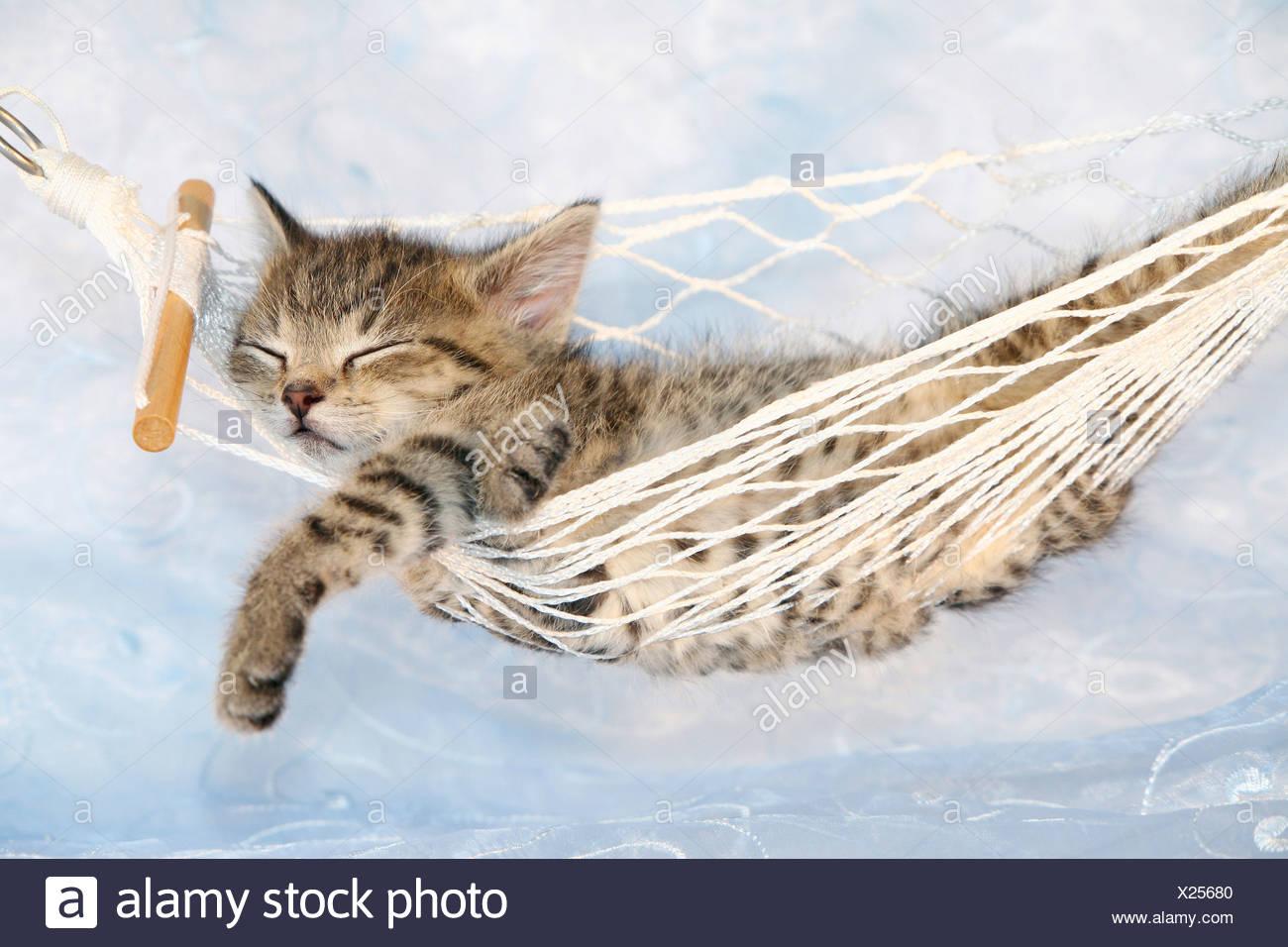 Cat Kitten Sleeping Hammock Stock Photos Amp Cat Kitten