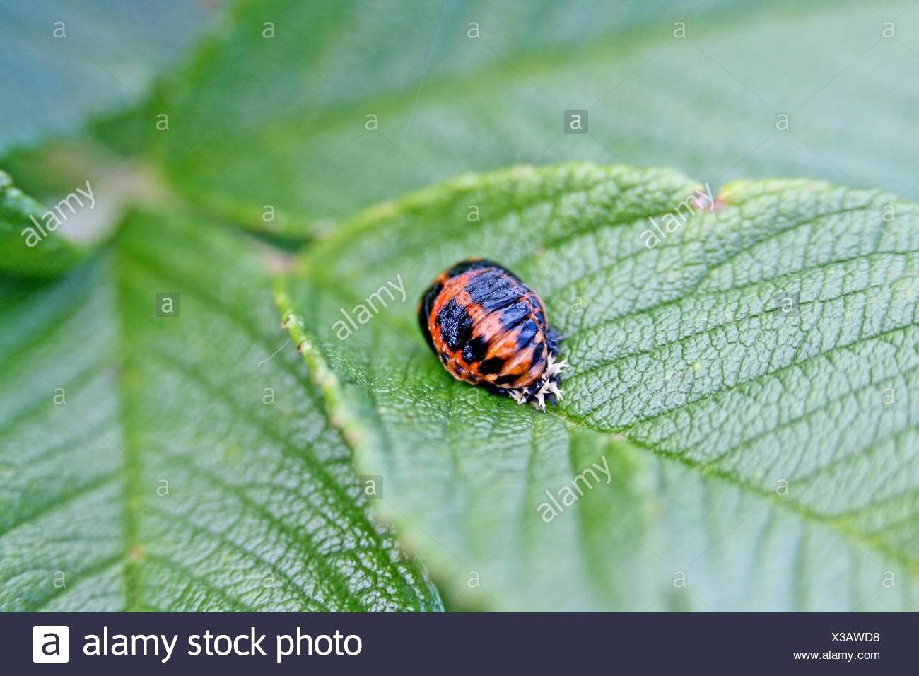 Tip Insect Eating Plants
