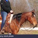 Western Riding American Quarter Horse Mare Workout Western Tack Snaffle With Shanks Western Saddle Stock Saddle Stock Photo Alamy