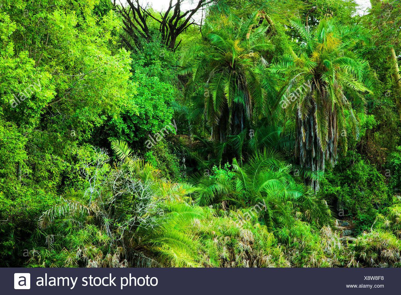 Download tropical rainforest landscape background. Jungle Bush Trees Background In Africa Tsavo West Kenya Stock Photo Alamy