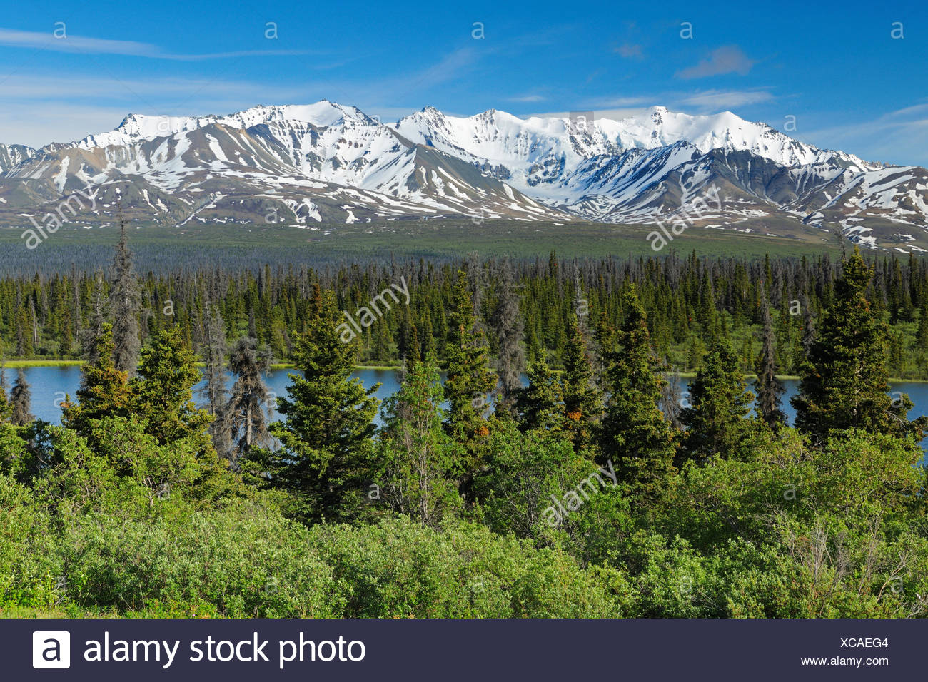 We encourage our guests to take things easy and to maybe have an evening campfire and socialize a bit. St Elias Mountains And Boreal Forest Kluane National Park Yukon Canada Stock Photo Alamy