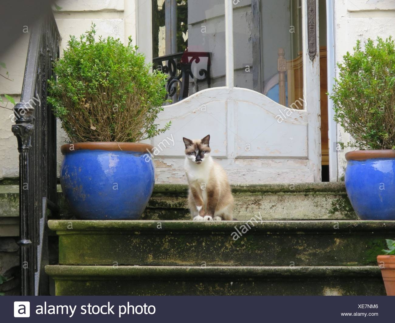 Cat Sitting On Steps Outside House Stock Photo Alamy   Outside Steps For House   Modern   Fancy   House Construction   Makeover   Small House