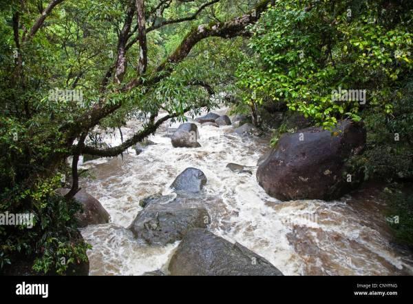 Fluss in einem tropischen Regenwald Australien
