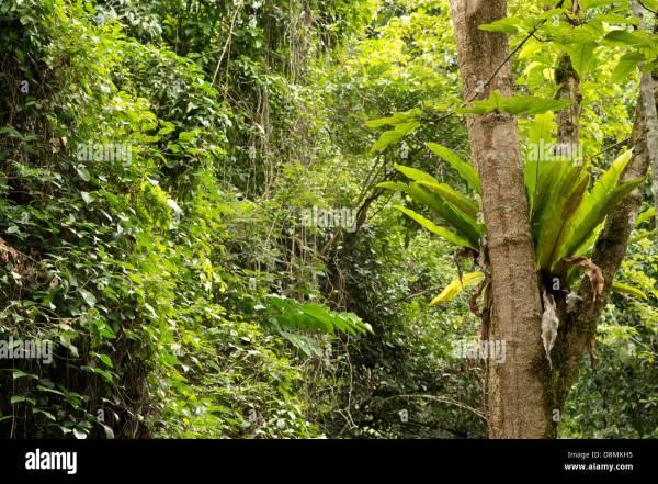 Regenwald an der KristallKaskaden in der N228he von Cairns