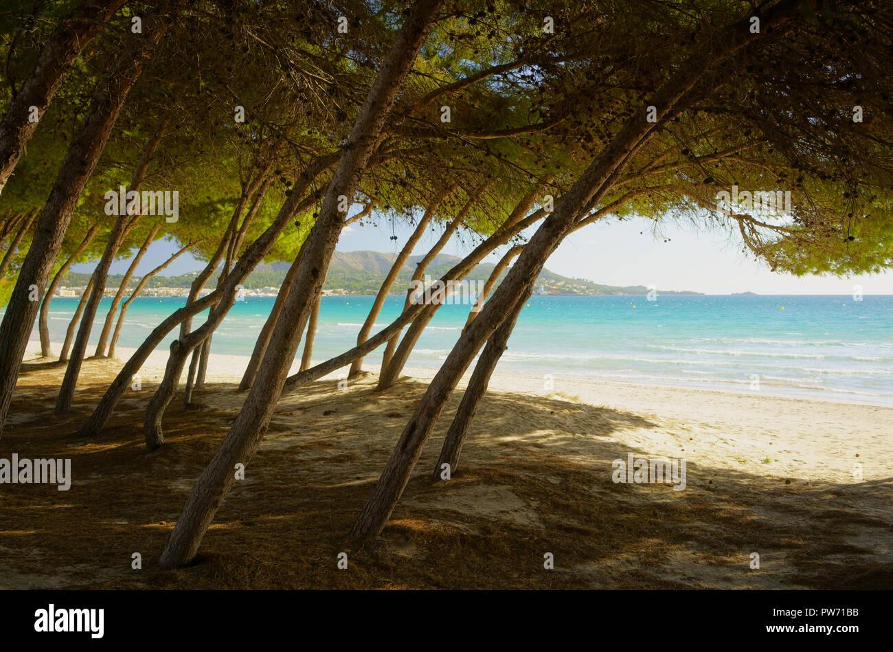 mallorca playa de muro alcudia strand