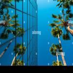 Palmen Und Gebaude Aus Glas Die Froschperspektive Hollywood Los Angeles Kalifornien Vereinigte Staaten Von Amerika Nordamerika Stockfotografie Alamy