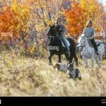 Appaloosa Friesian Fotos E Imagenes De Stock Alamy