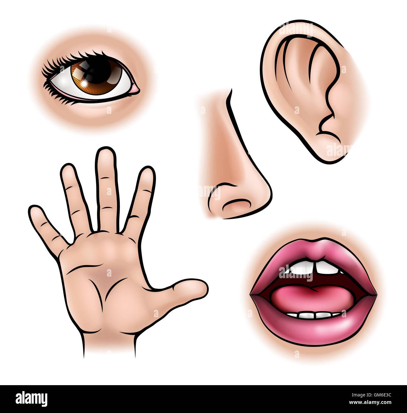 Five Senses Illustration Fotos E Imagenes De Stock
