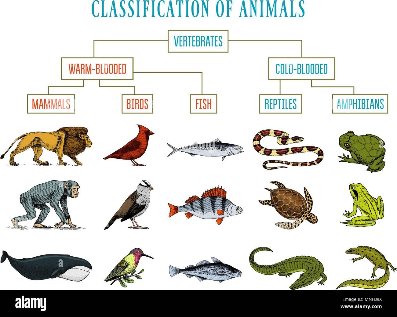 Clasificacion De Los Animales Los Reptiles Anfibios