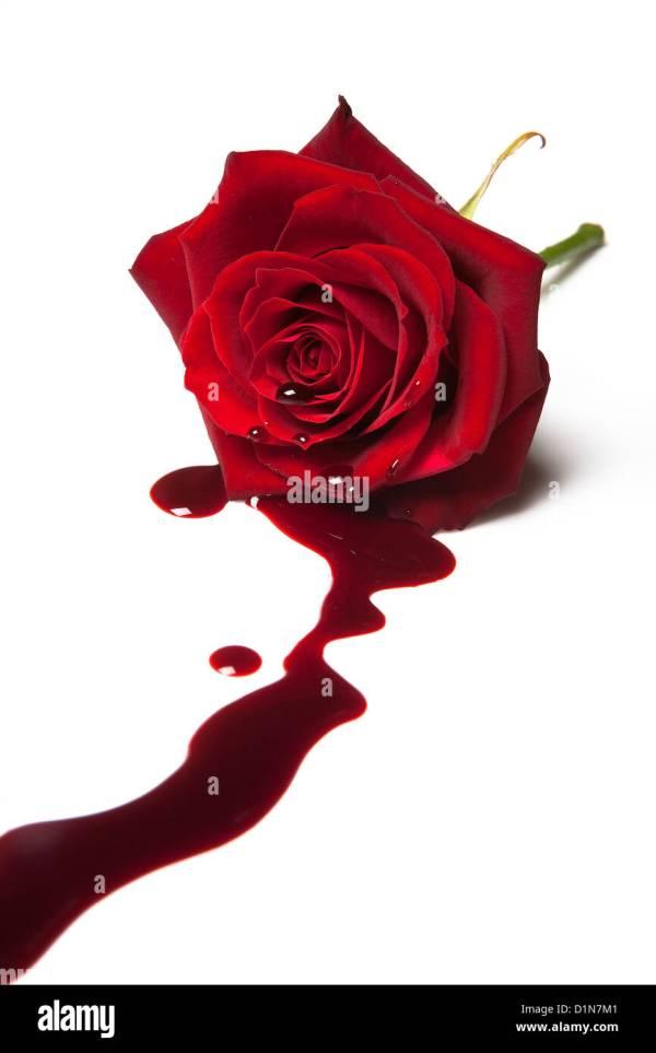 Rose rouge avec du sang coulant de son coeur Banque D ...