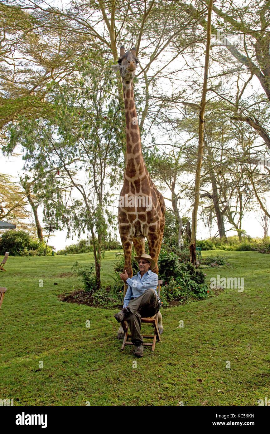 https www alamyimages fr photo image le port touristique hat pose assis sur une chaise en face d eric une personne friendly girafe a elsamere kenya naivasha 162384201 html