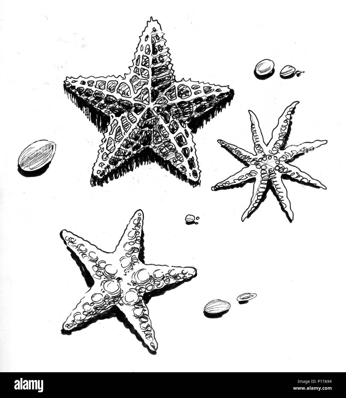https www alamyimages fr des etoiles de mer sur la plage dessin noir et blanc encre image207300832 html