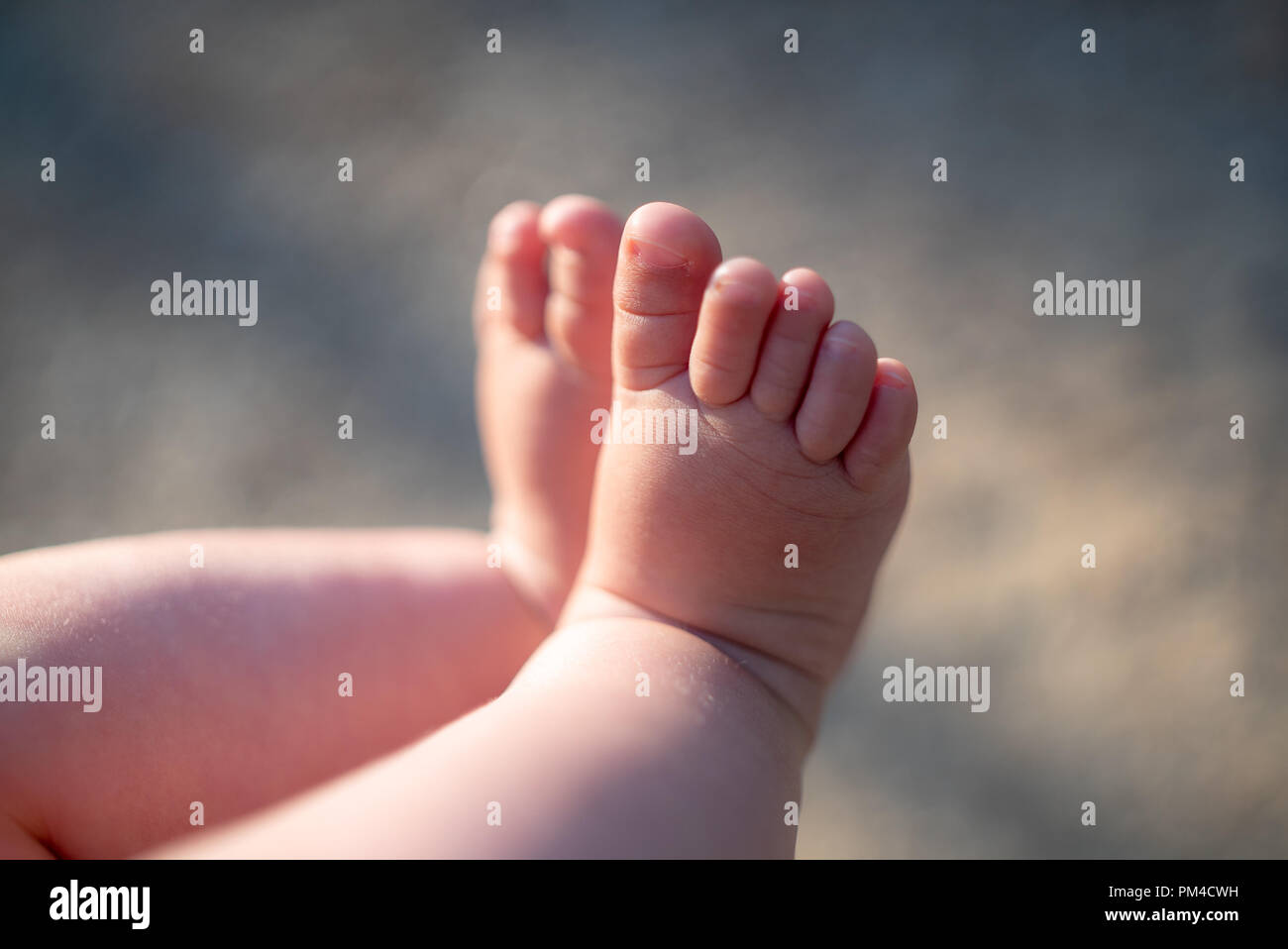 https www alamyimages fr jambes pieds de bebe bebe 6 mois image218915469 html