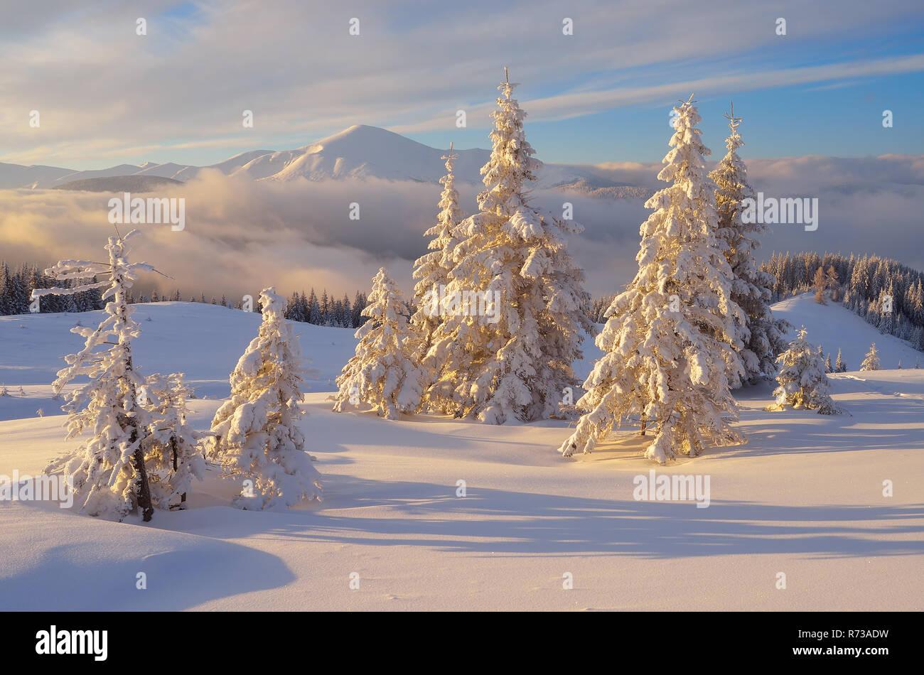 I migliori articoli di oggi. Favoloso Paesaggio Di Natale Abeti Sotto La Neve Belle Montagne Invernali Foto Stock Alamy