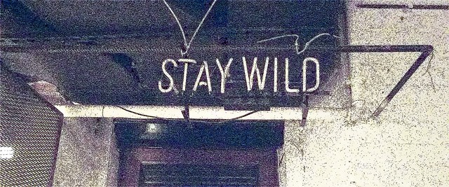 Stay wild stylised