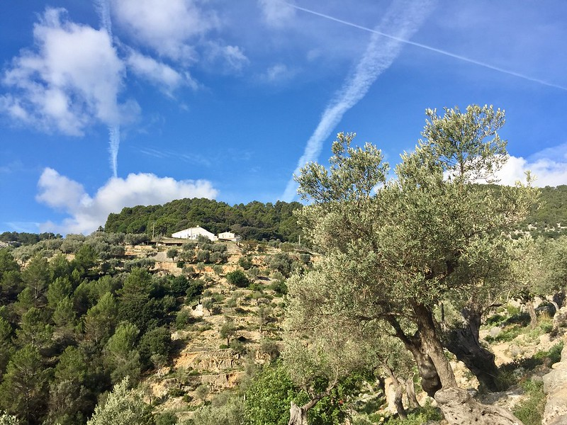 Trail-running al Castillo de Alaró