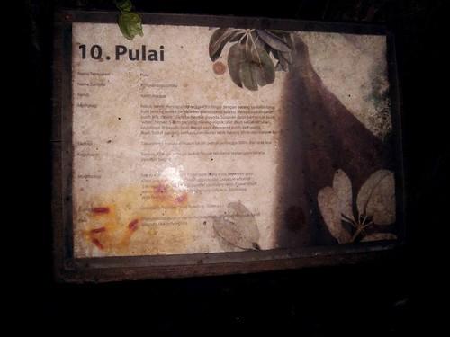 Pulai Tree plaque