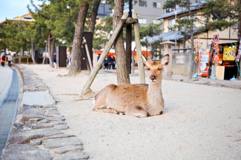 2016 宮島 Hiroshima 122