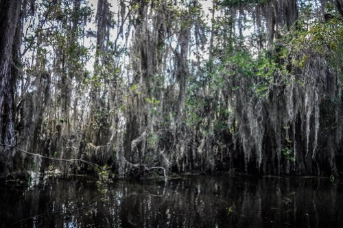 Lowcountry Unfiltered at Okefenokee-093