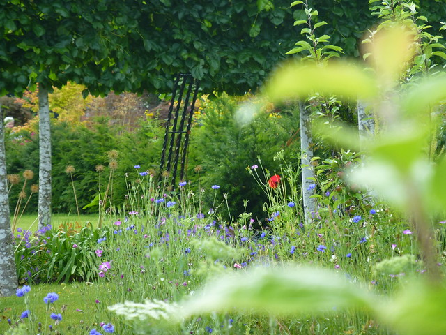 Bangor Walled Gardens July16