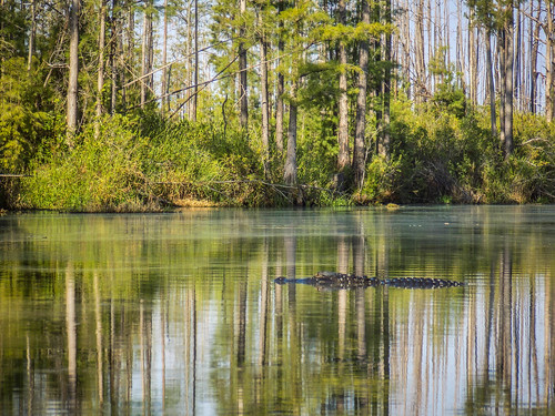 Lowcountry Unfiltered at Okefenokee-212