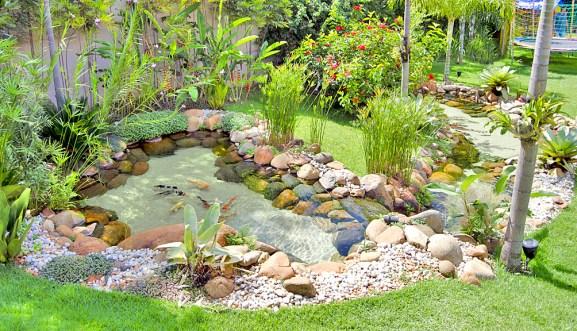 plantas-para-lagos-ornamentais-3