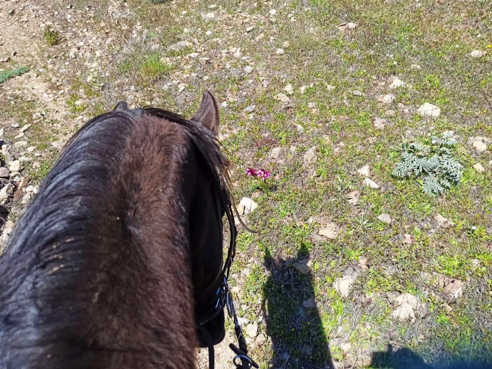 Horse riding in Andalusia