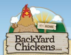 BackYard Chickens