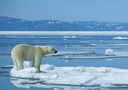 Ei_polar_bear_2
