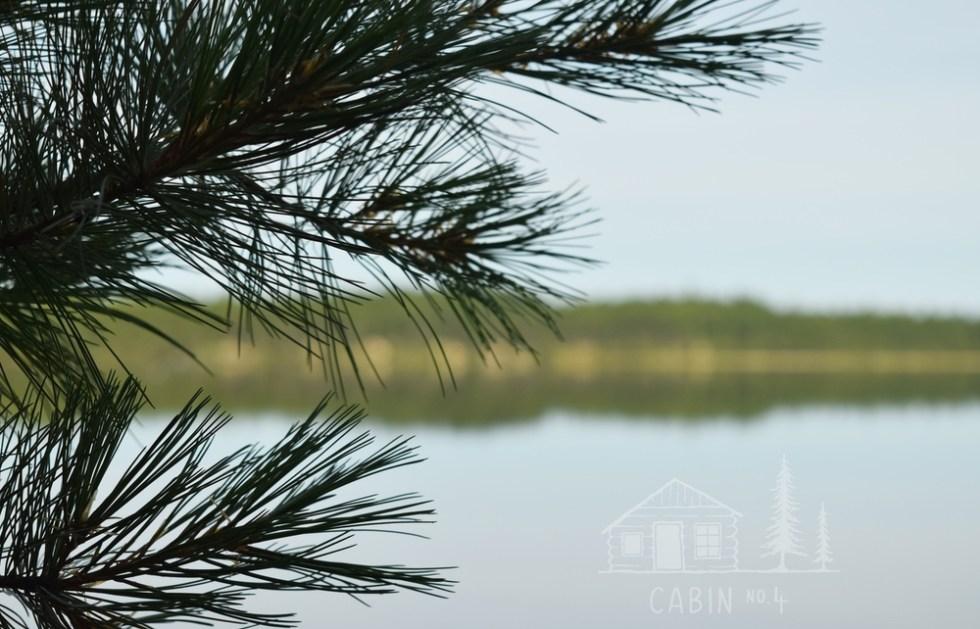 wholesale image, decorative - trees and lake