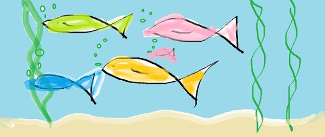 fish photo resized