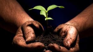 plante main