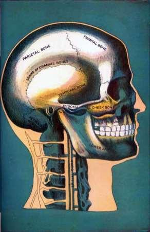 Bones of the Head