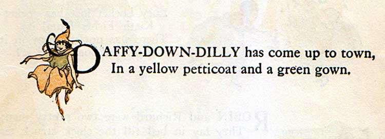 Daffy-Down-Dilly