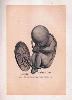 Foetus at Nine Months