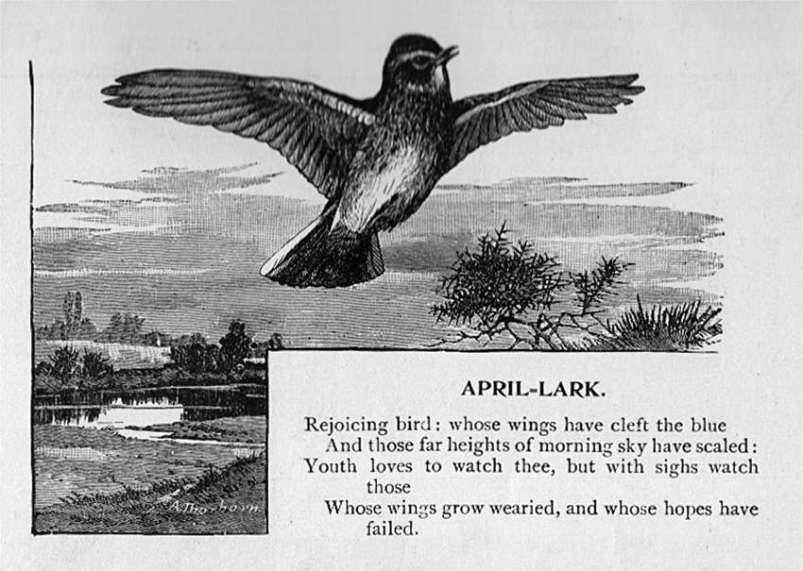 April - Lark