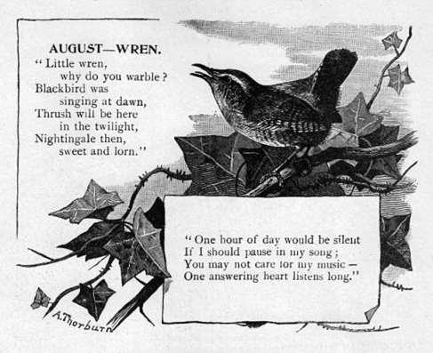 August - Wren