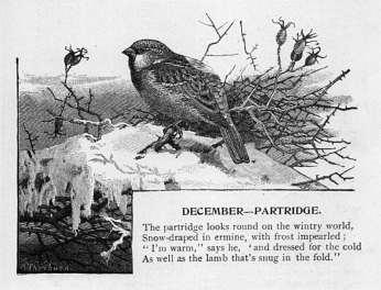 December - Partridge