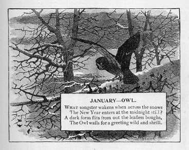January - Owl